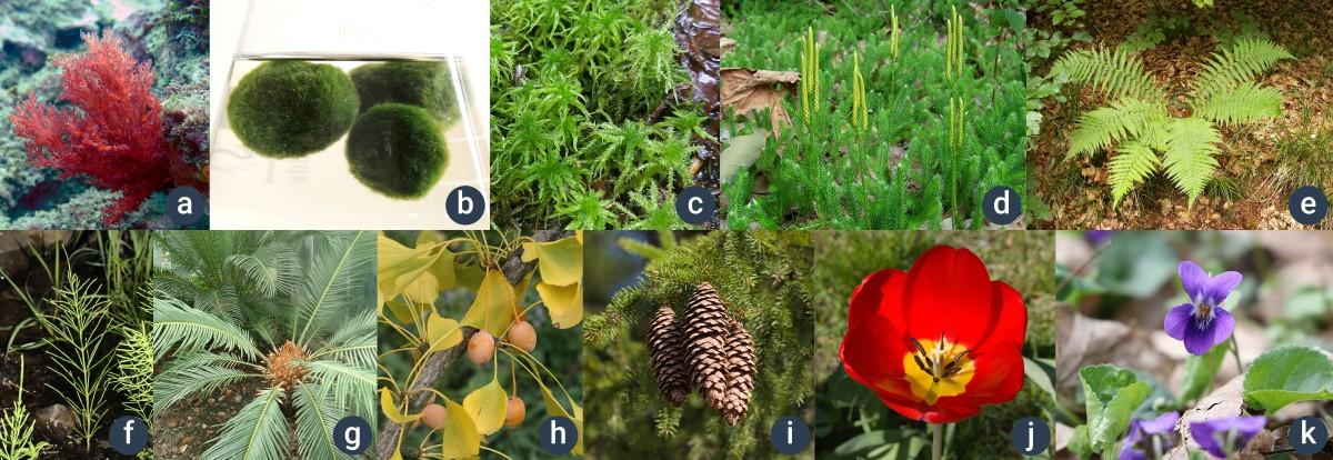 příklady z hlavních skupin rostlin