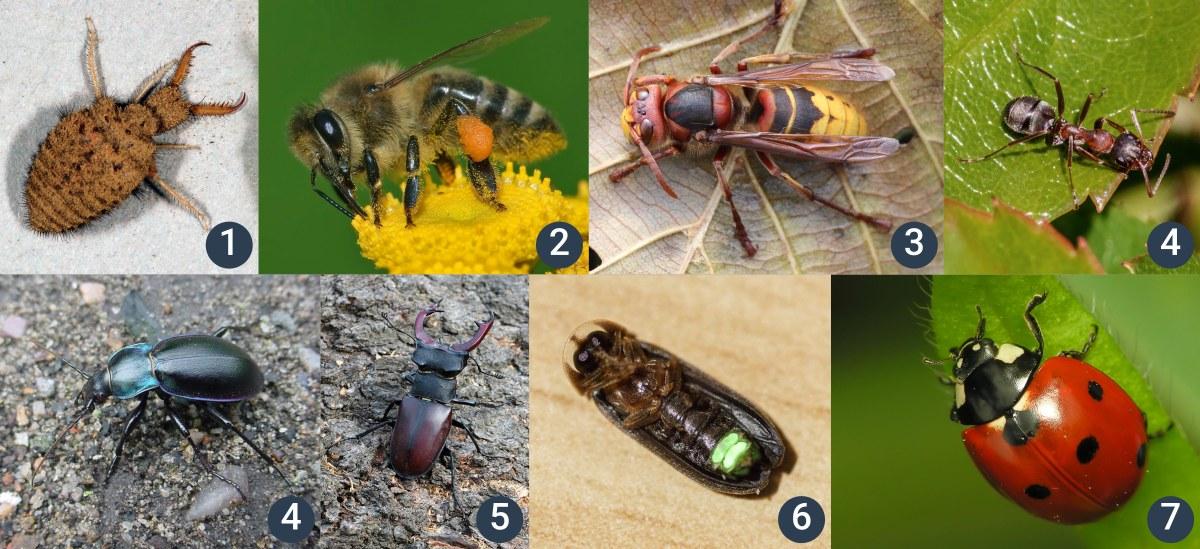příklady hmyzu sproměnou dokonalou