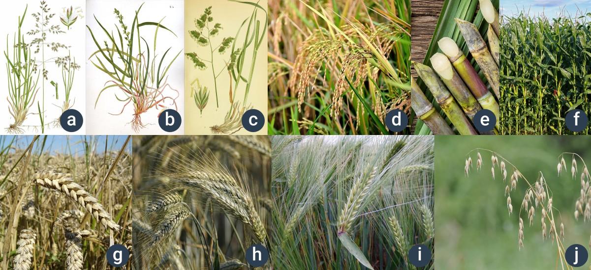 příklady kosatcovitých rostlin