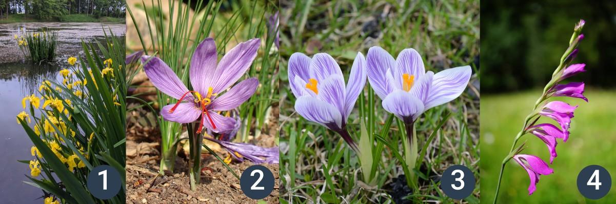 příklady lipnicovitých rostlin
