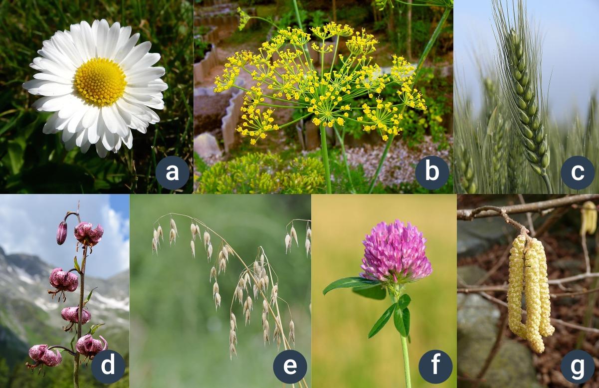 různé typy květenství