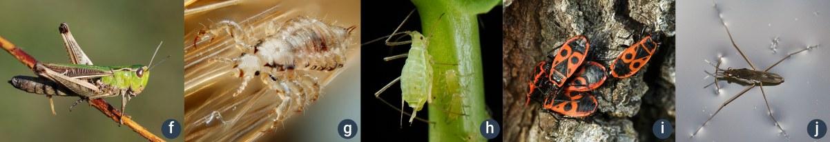 příklady hmyzu sproměnou nedokonalou