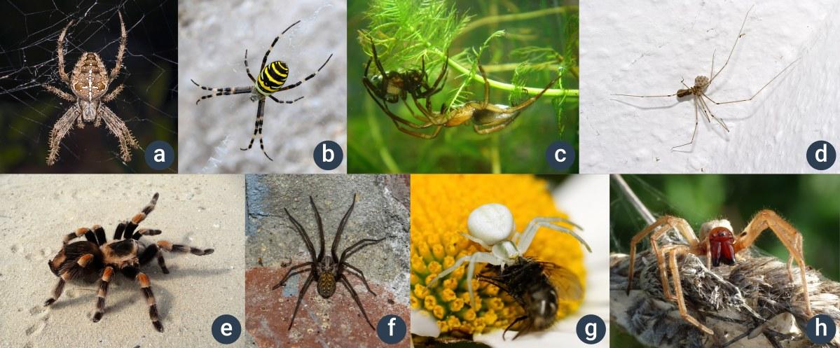 příklady pavouků