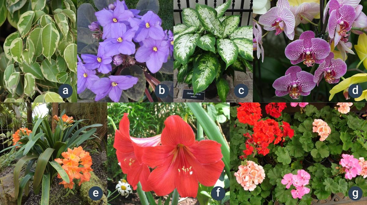 příklady pokojových rostlin