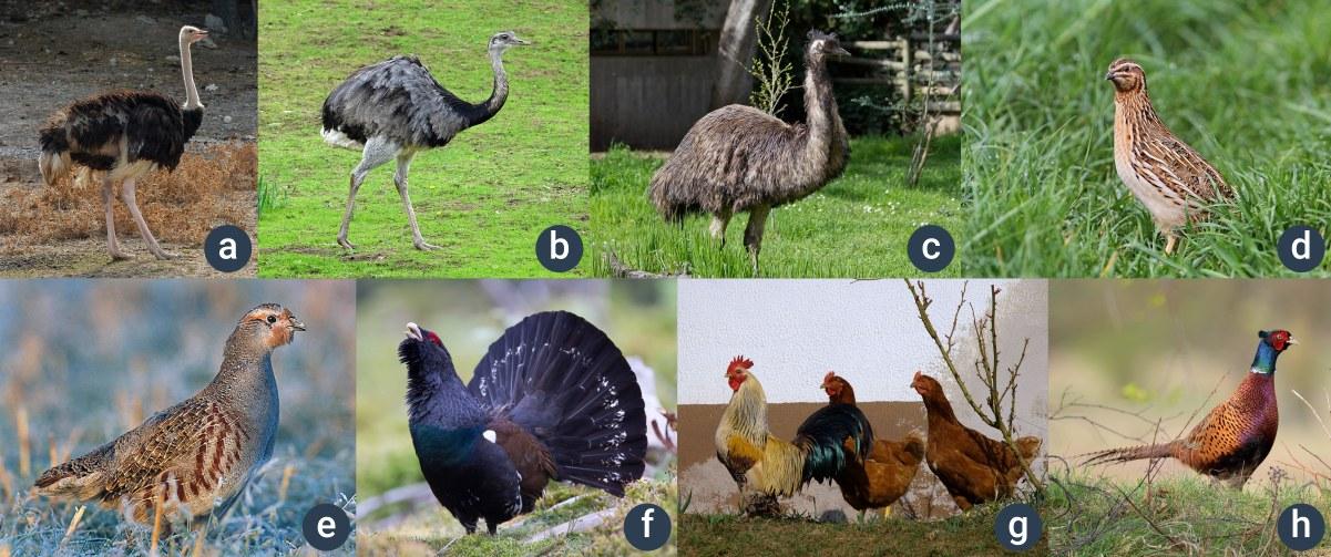 příklady ptáků