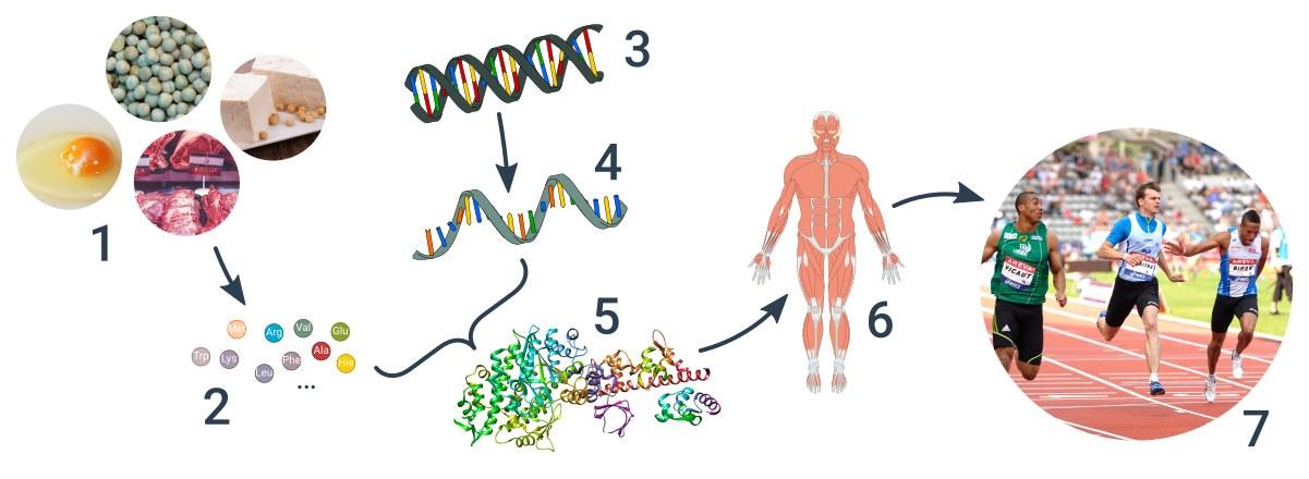 od DNA ke znaku
