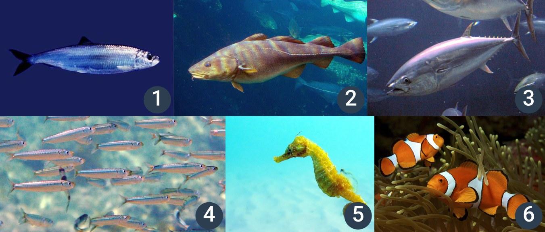 příklady ryb