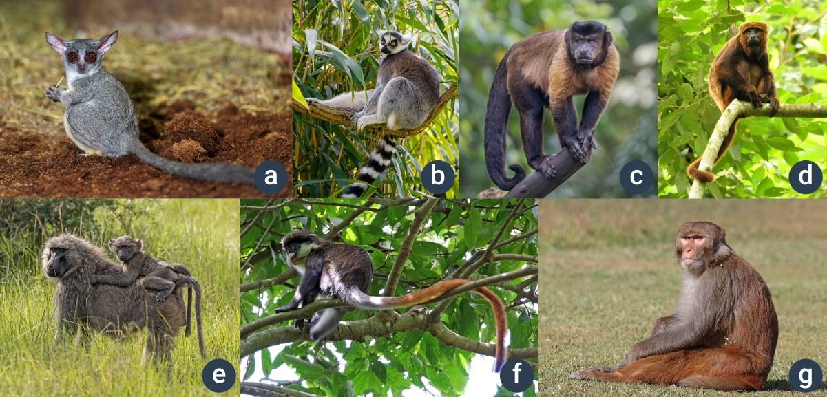 příklady opic