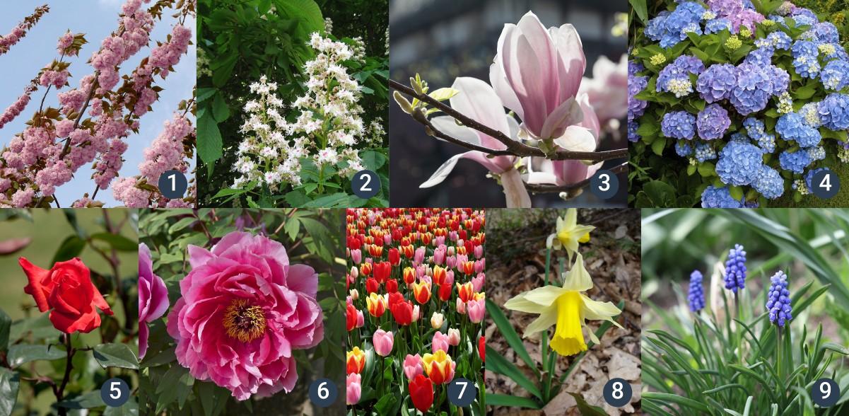 příklady venkovních okrasných rostlin