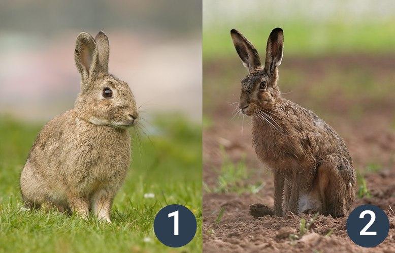 příklady zajícovců